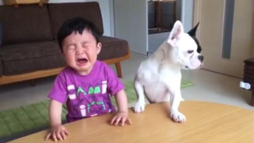 狗狗抢小主人的零食,宝宝气的大哭,没想到狗狗的举动更气人!