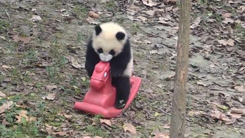 熊猫宝宝正在玩木马,奶妈强行收走以后,下一秒憋住别笑