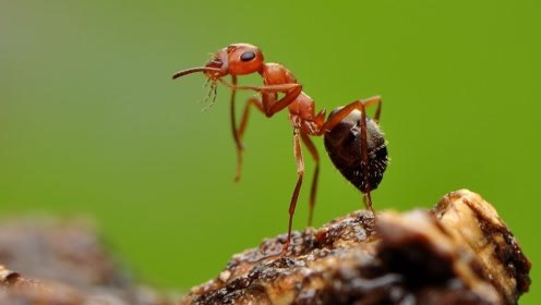 为什么蚂蚁醒来要抓痒痒,他们也怕痒吗?答案有点啼笑皆非