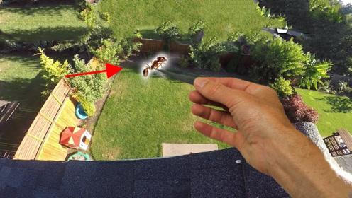 蚂蚁从高空坠落会摔死吗?摄像机还原全过程,你猜结局会怎样?