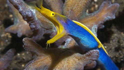 神奇生物随体长增长变性变色,如海草一般随波漂流