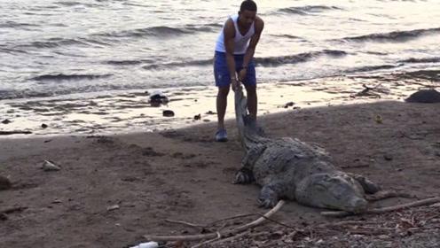 鳄鱼游到岸上,受到人们的热情款待,三次吃鱼不成好尴尬