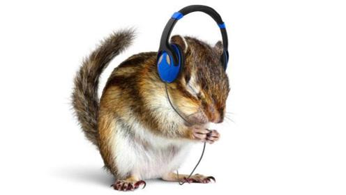 音乐不仅无国界 而且人畜皆可摇!当动物听见音乐的时候