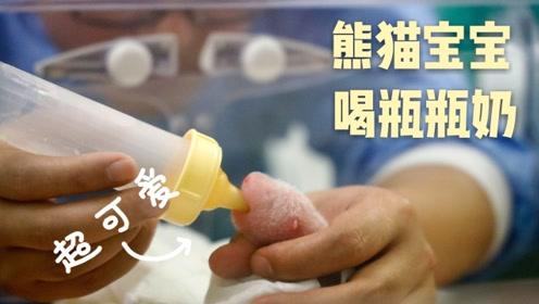 """喜诞龙凤胎!旅居比利时大熊猫二度产崽 中国专家照顾""""坐月子"""""""