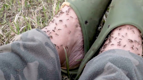 """美国最恐怖""""巨蚊"""",动物被盯上就成为干尸,镜头记录全过程!"""