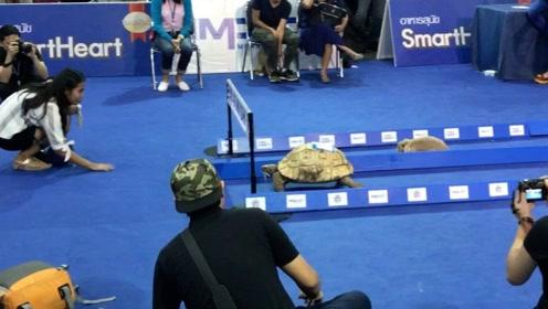 现实版龟兔赛跑,即使兔子不睡觉,一样赢不了!背后故事真打脸