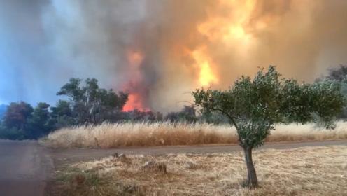 希腊发生森林火灾,一位消防员被烧伤,已邀请邻国加入灭火行动