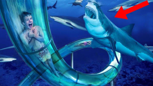 世界最刺激的滑滑梯,高空坠落还穿过鲨鱼群,小哥:吓软了!