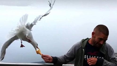 男子一口没舔的冰淇淋,海鸥直接整个叼走了
