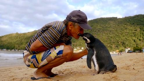 老人冒险救下小企鹅,一年后发生感人一幕,网友:动物也会感恩