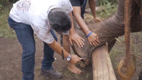 巴厘岛大象修脚师,就跟削土豆一样利索,年入百万不是问题!