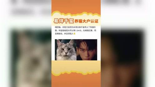 易烊千玺养猫大户认证