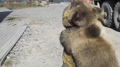 男子与熊进行搏斗,熊最后的举动出乎意料