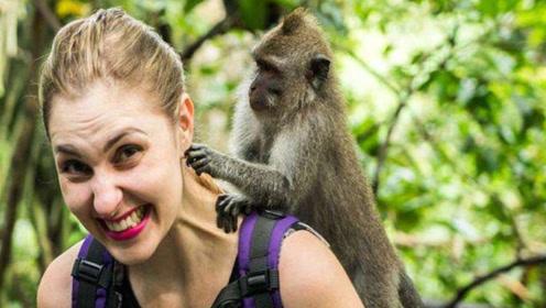 神仙还是杀手?印度猴子泛滥居民和游客不堪其扰,政府无法治理