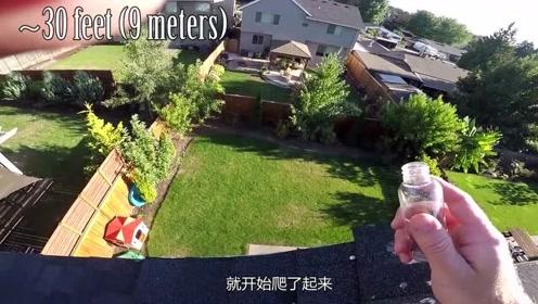 从9米的屋顶扔下一只蚂蚁,会出现什么情况?落地后感到一阵自卑