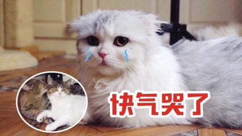小短腿看到别家猫妈妈在给宝宝舔毛,羡慕得要哭:能给我也舔舔吗