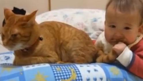 猫咪反射弧太长,被宝宝抓住尾巴,好几秒后才发现!