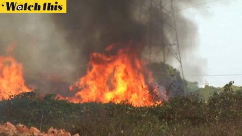 巴西亚马逊森林大火持续数日 消防人员灭火投入大量人力物力