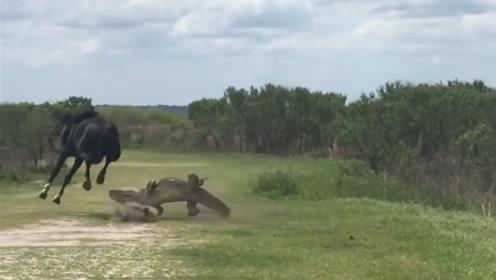 马儿低头吃草,看到鳄鱼悠哉的晒太阳,随后马儿的举动让人没想到