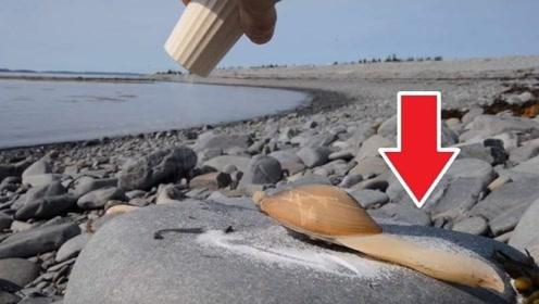 在蛤蜊周围撒上一层盐,猜猜结果会怎样?镜头拍下全过程