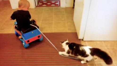 当傲娇猫咪遇上宝宝,场面变得异常热闹,网友:二傻日常欢乐多!