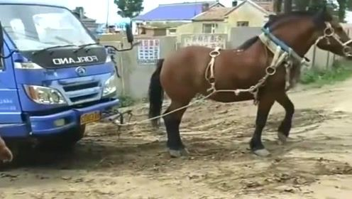 货车被困在了泥坑里,这时候马就很重要了