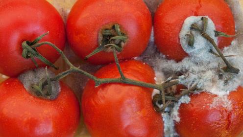 烂掉的西红柿一定要留下来,拿钱都买不来,看完视频感觉赚到了