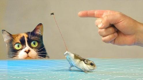 一只苍蝇能举起多少重量?老外给苍蝇绑绳子,结果令不敢相信