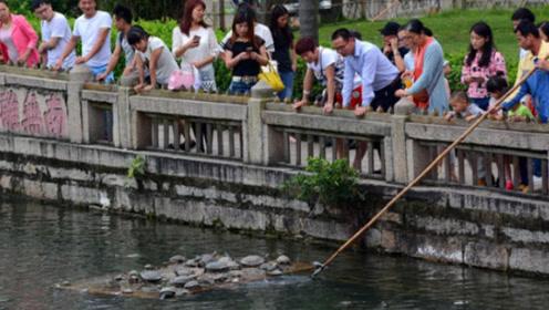 众人放生乌龟,几天后女子看到放生池一幕,立马选择报警
