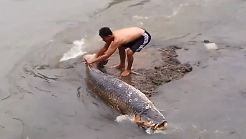 一场大暴雨后,一条巨大的鱼搁浅河中,村民走近一看不对劲!