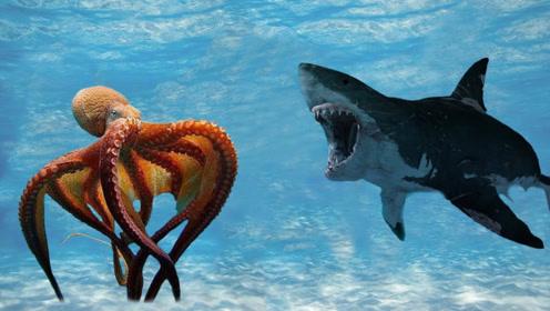 鲨鱼觅食偶遇巨型章鱼,本以为鲨鱼美餐一顿,结果发生意外画面!