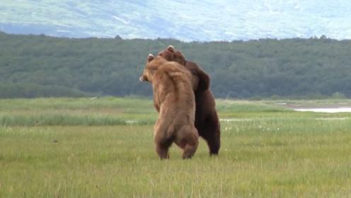 """两只黑熊正在搏斗,遇好心大爷""""劝架"""",意想不到的事情发生了"""