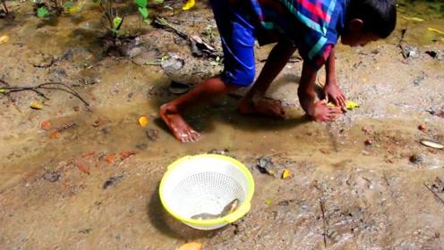 村口的水渠干透了,鱼儿在水里挣扎,农村熊孩子一路抓鱼,太爽了