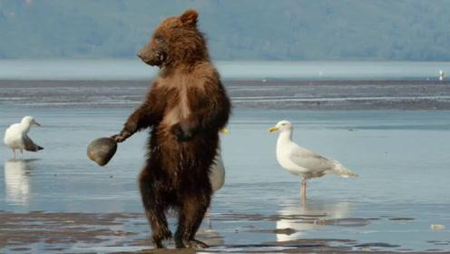 小棕熊捡贝壳时,不小心被夹住手,棕熊的反应太搞笑了