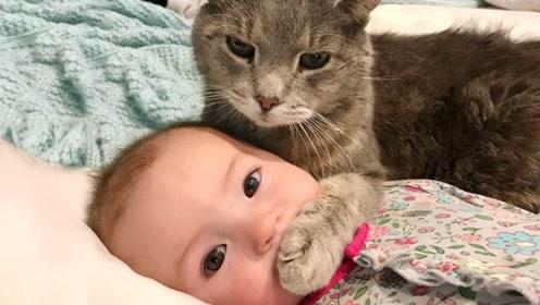 为什么猫咪对婴儿更有耐心,甚至被打也不还手?看完心中一暖