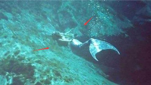 """海上出现罕见""""美人鱼"""",数人同时见证,老渔民一眼便认出此生物"""