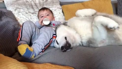 小主人帕克在沙发喝奶哈士奇米莉就在旁边陪着一起入睡,令人动容