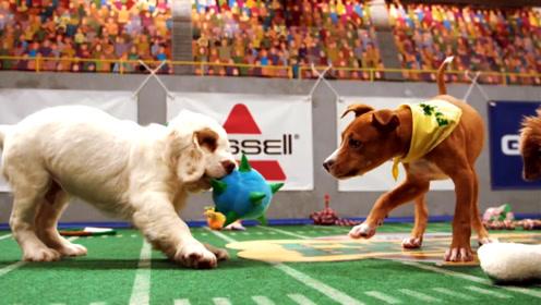 """专门为狗狗们定制的""""小狗碗""""比赛,还请来树懒当裁判"""