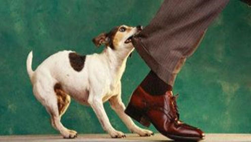 防狗咬指南:突然被狗攻击学会这诀窍,轻松自保,太管用了