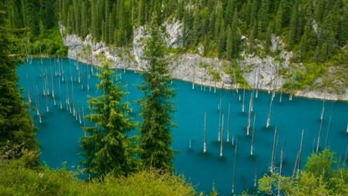 湖泊里的树木倒着生长,潜水员下去发现一座水下迷宫