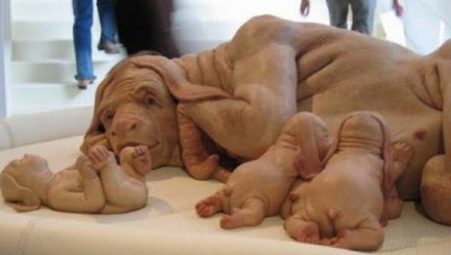日本批准人兽杂交胚胎实验,是福音还是灾难?看完让人接受不了!