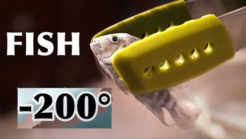 把活鱼放进液氮还能复活吗?小哥作死测试,原来冷冻人真实存在!