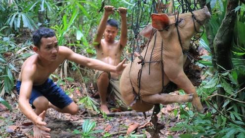 兄弟俩在野外设陷阱抓了一头小猪,直接烤着吃,真是太满足