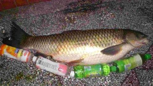 68岁大爷钓到大鱼,觉的鱼肚子不对劲,剖开肚子之后傻眼了!