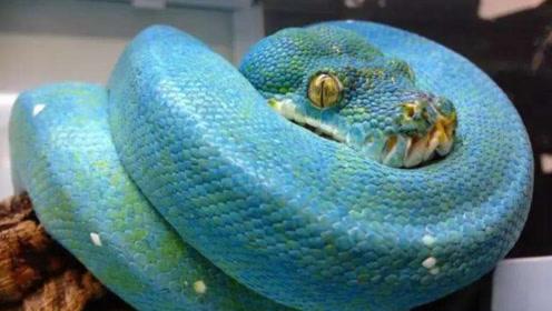 """大爷为了自保,打死一条奇怪""""蓝蛇"""",没想到一条竟价值上百万!"""