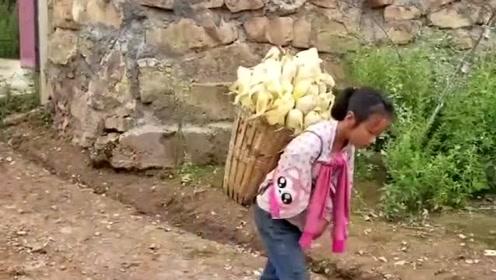 11岁的女儿,背着玉米腰都压弯了,我这算不算雇佣童工呢?