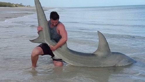 """牛人""""徒手""""去抓大白鲨,不料发生意外,镜头记录疯狂瞬间"""