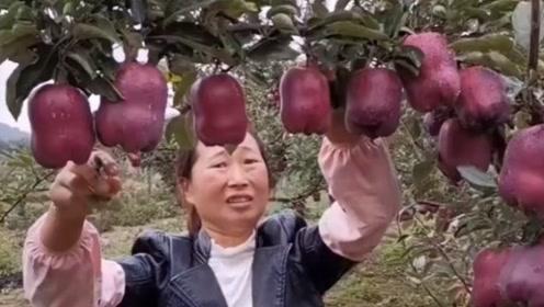 这才是种水果的高手,看这长势,太喜人了!