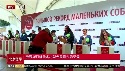 俄罗斯打破最多小型犬摄影世界纪录
