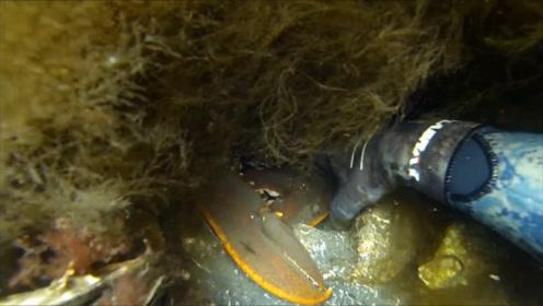 潜水员在海下寻宝,发现一个大钳子,用手拖出才发现是个大家伙